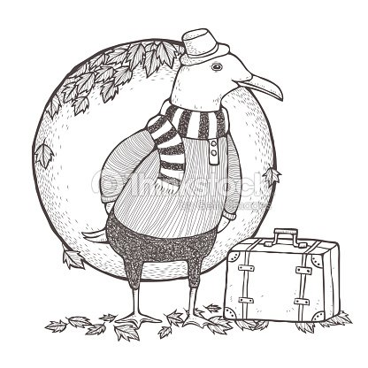 Traveled Seagull Coloring Page Vector Art | Thinkstock