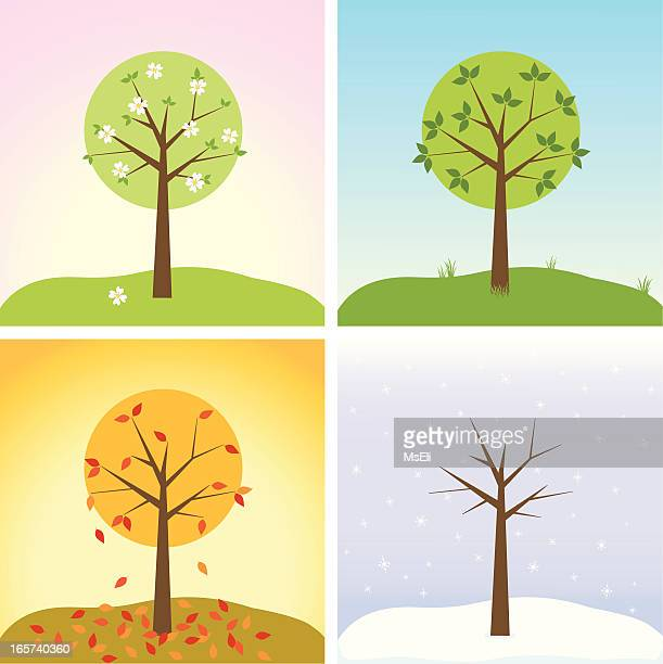 Arbre en quatre saison
