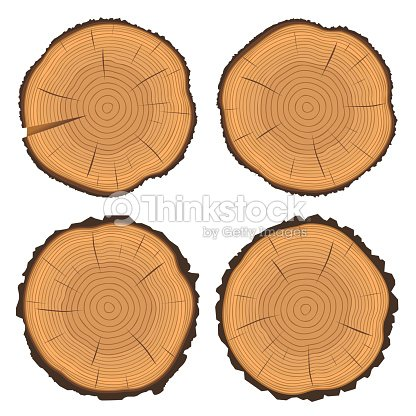 Tree Rings And Saw Cut Trunk Vector Art
