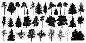 Tree silhouette black vector. Isolated set forest trees on white background