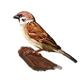Tree sparrow holding on twig isolated on white,vector illustration