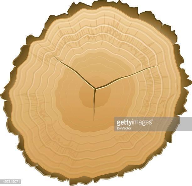 Illustrations et dessins anim s de souche d 39 arbre getty images - Produit destructeur de souche d arbre ...
