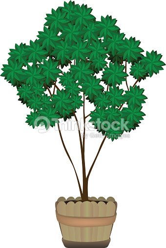 Tree Tree In Vase Wood Small Tree Vector Art Thinkstock