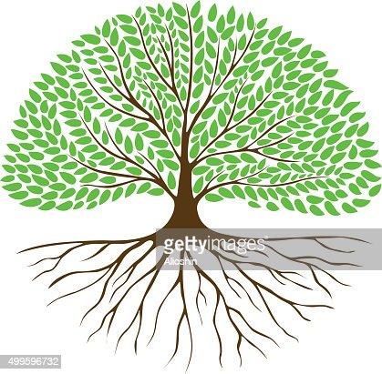 Arbre Avec Racine arbre avec racines et feuillage vert système clipart vectoriel