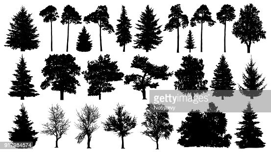 Trees set silhouette. Coniferous forest. Isolated tree on white background. : Vector Art