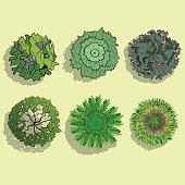 Landscape Design Symbols, Trees Top View, Vector