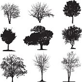 Various isolated tree silhouettes on a white background