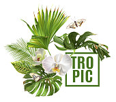 Vector botanical banner with tropical leaves orchid flowers and butterfly on white background. Design for cosmetics, spa, health care products, travel company. Can be used as summer background