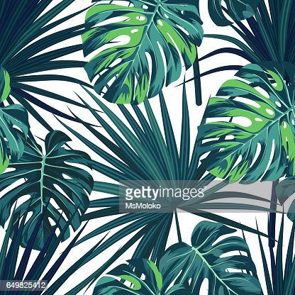 Tropical background with jungle plants. Seamless vector tropical pattern with green sabal palm and monstera leaves : stock vector