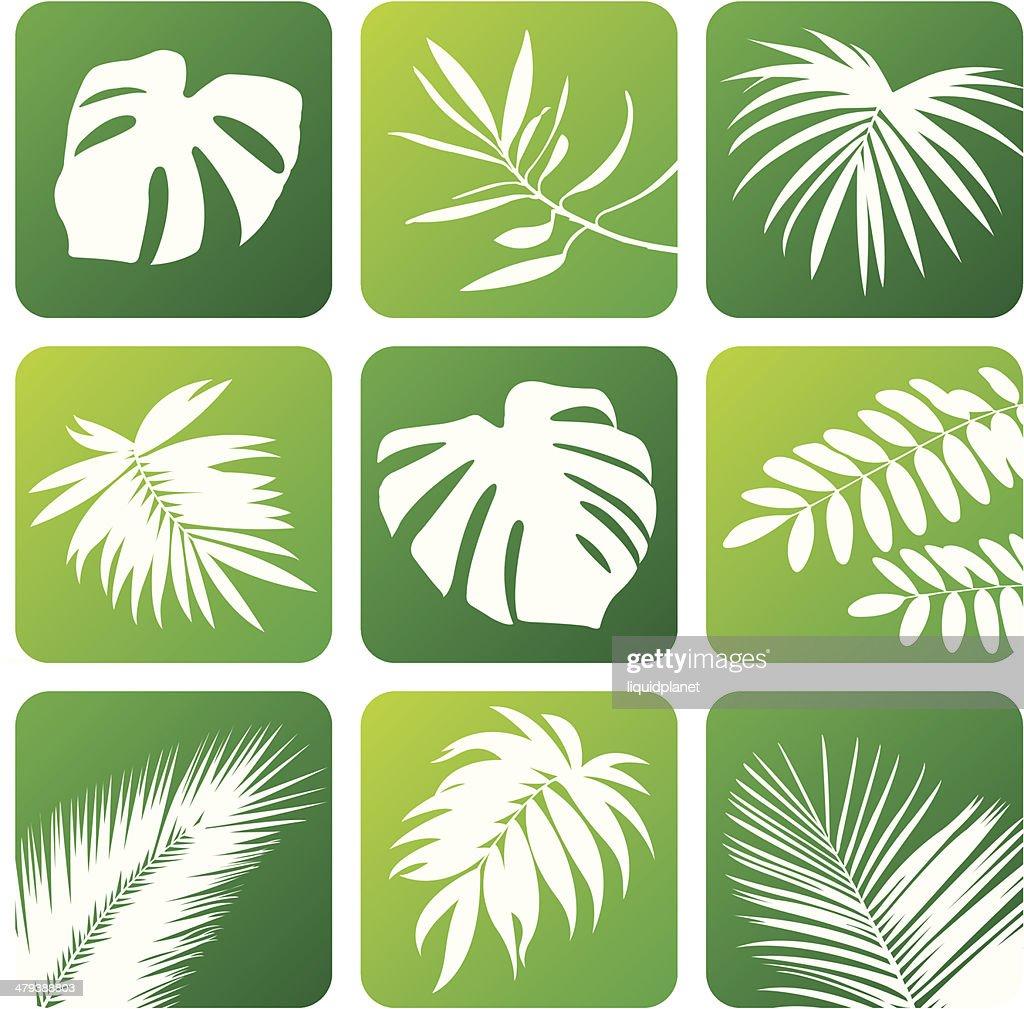 Tropical Design Elements Vector Art Getty Images