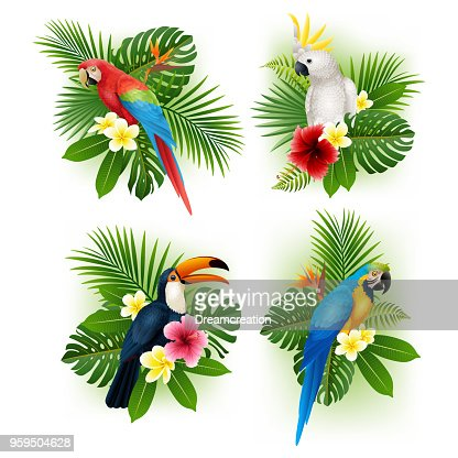 Tropical flower and bird collection set : stock vector