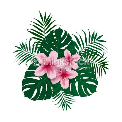 Tropical Flower Bouquet Of Green Palm Leaves Leaves Of Monstera And