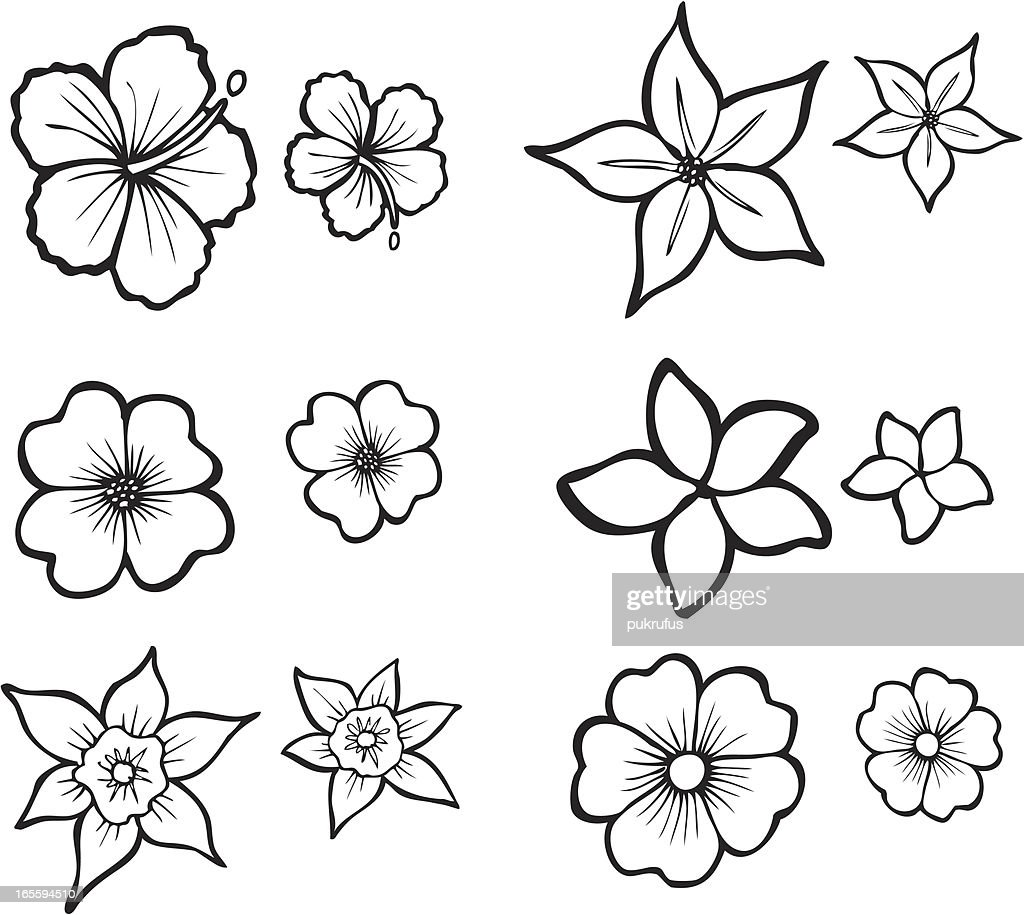 Hawaiian Flower Line Drawing : Tropical flower line art vector getty images