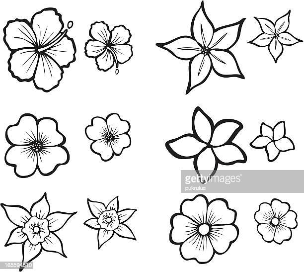 Illustrations et dessins anim s de frangipanier getty images - Dessin de fleur facile ...