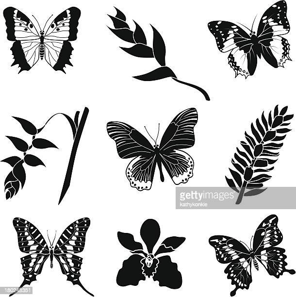 Tropische Blumen und Schmetterlinge