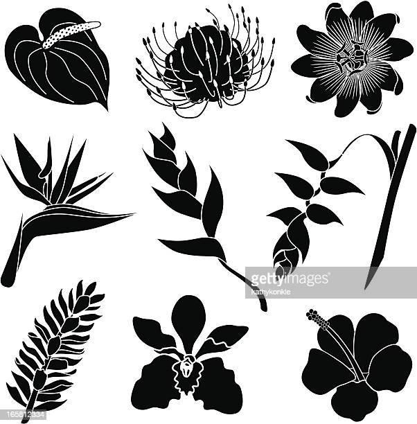 Tropischen Blumen