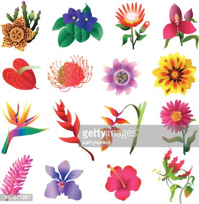 tropical flowers vector art  getty images, Beautiful flower