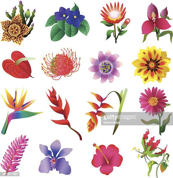 tropical flower vector art and graphics  getty images, Beautiful flower