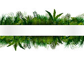 vector illustration of Tropical foliage. Floral design background