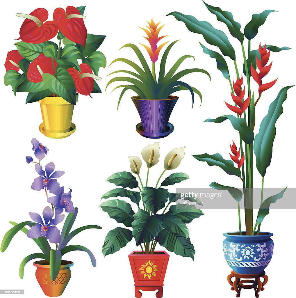 tropical house plants vector art - Tropical House Plants