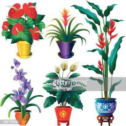 tropical house plants vector art  getty images, Beautiful flower
