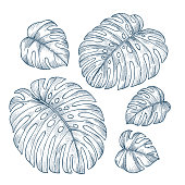 Tropical monstera leaves collection. Engraved jungle leaves