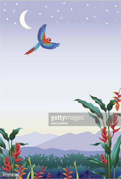 Tropische beginnen mit parrot