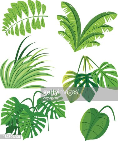 tropical plants vector art  getty images, Beautiful flower