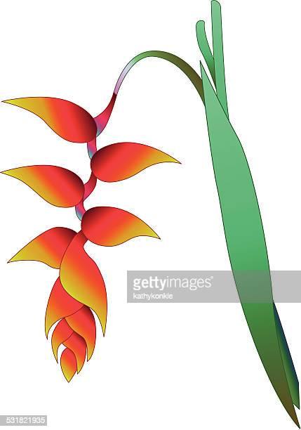 Tropischer Regenwald orange heliconia Blüte