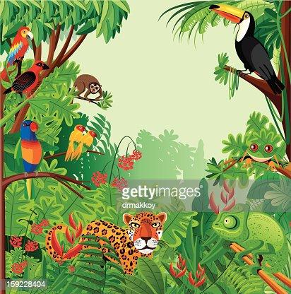Tropical rainforest : Vector Art