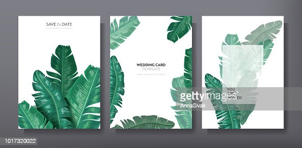 Tropical trendy greeting or invitation card template design, set of poster, flyer, brochure, cover, party advertisement, dark green palm leaves in vector : stock vector