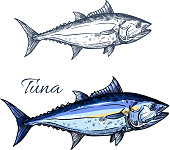 Tuna fish isolated sketch. Atlantic bluefin tunny fish for seafood packaging label, fish market symbol or restaurant menu design