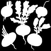 Turnip, vegetable, vector