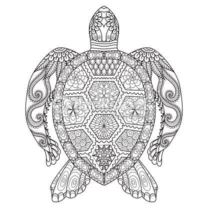 Página Para Colorear De Tortuga Arte Vectorial Thinkstock