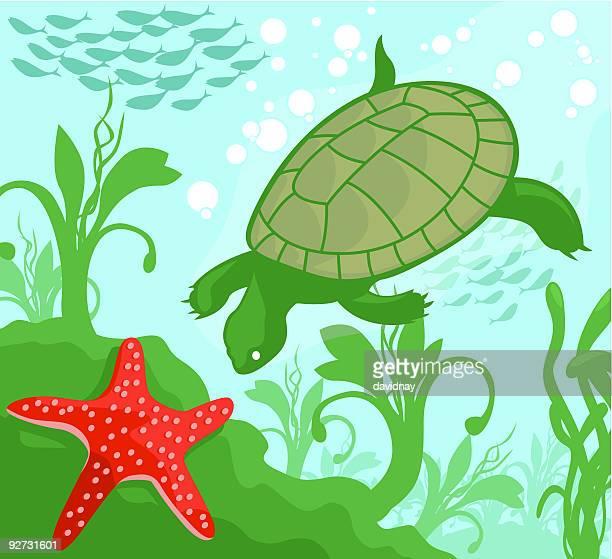 Turtle Explorer