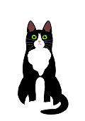 tuxedo cat sitting.