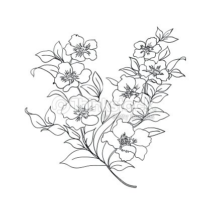 Twig cherry blossoms vector art thinkstock for Cherry blossom tree coloring page