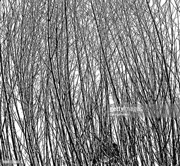 Twigs und Geäst Hintergrund Textur