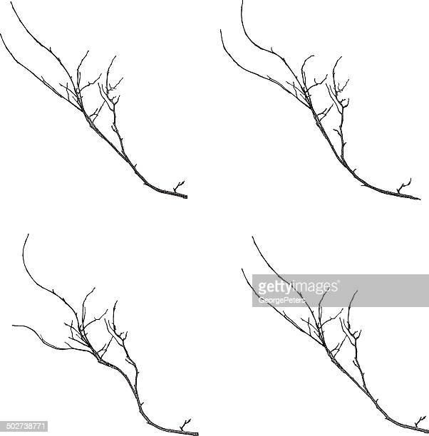 Twigs Isolated On White Background