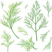 Green vector twigs of dill