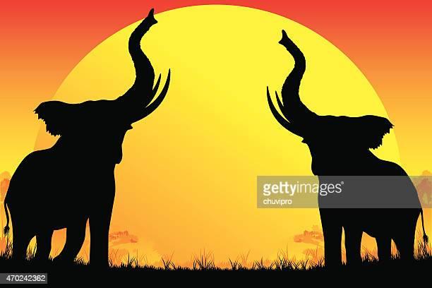 Dos elefantes africanos siluetas son trumpeting en caliente sol de fondo.