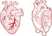 anatomical hearts line art vector illustration