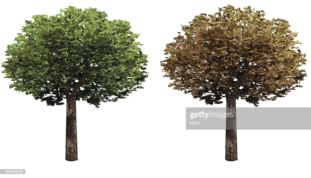 two trees design elements : Vector Art