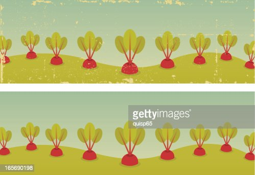 Two Vintage Beet Garden Banners Vector Art Getty Images