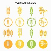 Vector icons set of different grains isolated on white