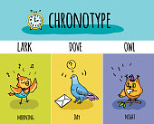 Typical of the person's daily activity. Vector illustration of chronotype of people. Biorhythm. Lark, pigeon, owl. Day and night activity bird.