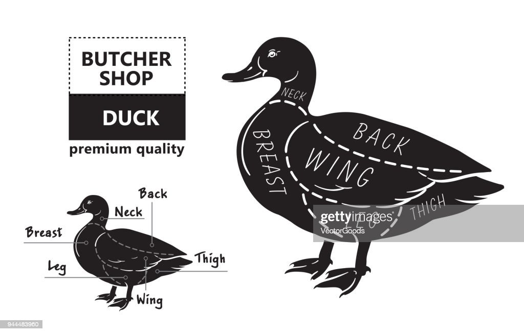 typographic duck butcher cuts diagram scheme vector id944483960?s=170667a&w=1007 typographic duck butcher cuts diagram scheme vector art thinkstock
