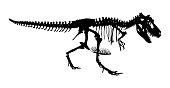 Tyrannosaurus Rex skeleton . Silhouette vector . side view .