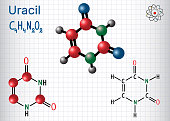 Uracil  (U) - pyrimidine  nucleobase in the nucleic acid of RNA. Structural chemical formula and molecule model. Sheet of paper in a cage. Vector illustration