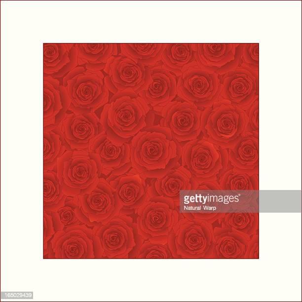 Valentinstag Rosen (Vektor